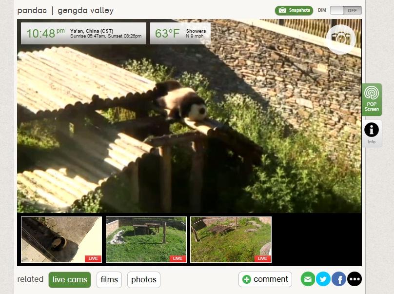 explore web panda