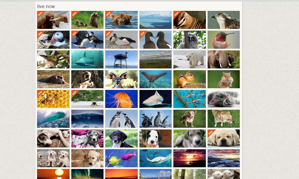 explore web webcams
